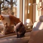 Chibi Vanwijnsberghe Cats
